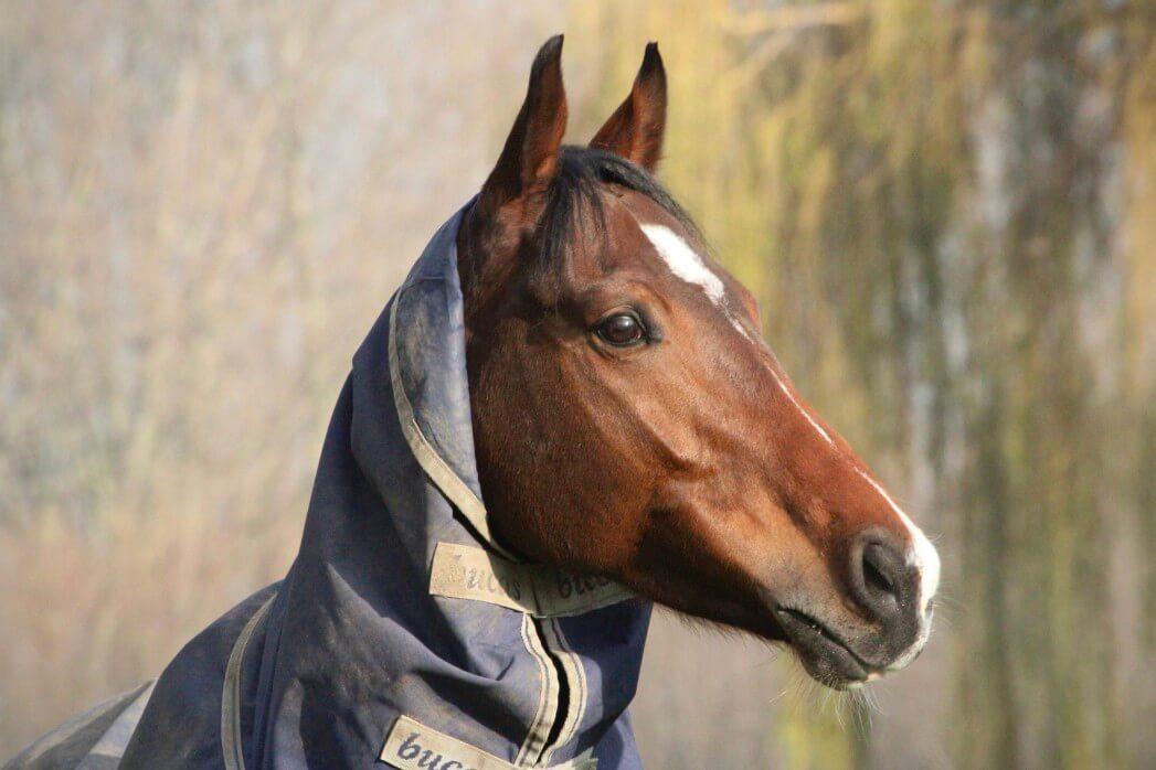 How to Waterproof Horse Blankets